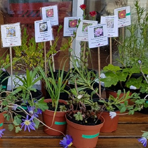 Plants at the Veryan & Portloe Store