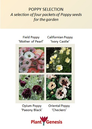 Poppy Selection / 4 packets of PlantGenesis Seeds