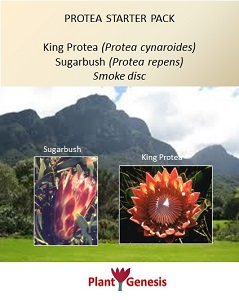 Protea Starter Pack / Protea seeds and Seed Primer Disc