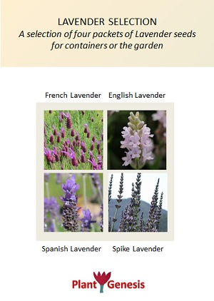 Lavender Selection / 4 packets of PlantGenesis Seeds