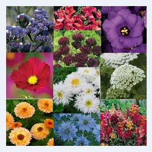 The Cut Flower Garden Collection / 10 Packets of PlantGenesis Seeds in a Gift Tin / Gift