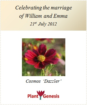 Wedding Favour Seeds / Cosmos Dazzler / Seeds