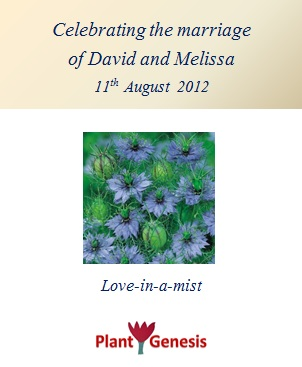 Wedding Favour Seeds / Love In A Mist / Seeds