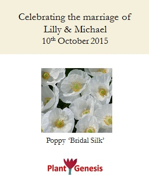 Wedding Favour Seeds / Poppy Bridal Silk / Seeds