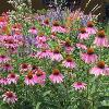 Looking for some Prairie planting inspiration?