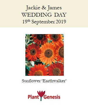 Wedding Favour Seeds / Sunflower 'Earthwalker' / Seeds