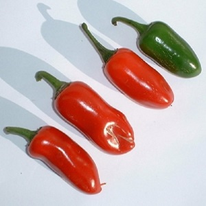 Pepper 'Jalapeno M'  / Hot Pepper / Seeds