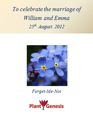 Wedding Favour Seeds / Forget Me Not / Seeds