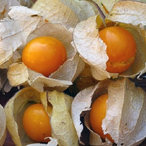 Physalis edulis / Cape Gooseberry / Tasty fruits / Seeds